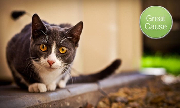 PetPromise - Governours Square: $10 Donation to Help Spay or Neuter Stray Cats