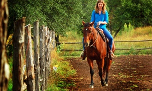 Healing Horse Ranch: Two Horseback-Riding Lessons at Healing Horse Ranch (70% Off)