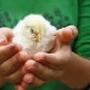 Up to 50% Off Petting-Zoo Visit at Johansen Farms
