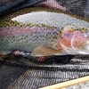 Half Off a Guided Fly-Fishing Trip for Two