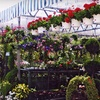 Half Off Garden Supplies and Plants in Orange