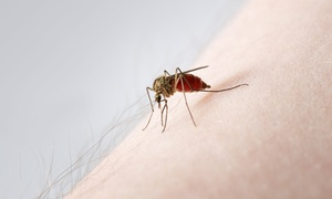 Natran Green Pest Control: One Time Lawn Mosquito Treatment from Natran Green Pest Control (36% Off)