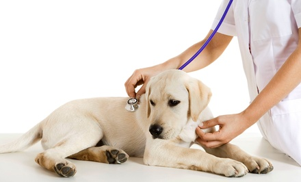 Dental or Physical  Exam for Dogs or Two or Five Nights of Boarding at St. Mina Animal Hospital (Up to 55% Off)