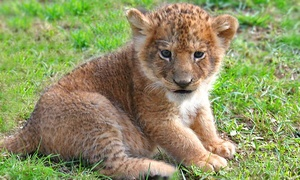 $120 For A Zoo On The Go Birthday Party From The Zoo In Forest Park And Education Center ($200 Value)