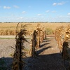 Up to 52% Off Corn Maze and Hayrides
