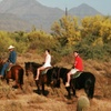 43% Off Guided-Horseback Trail Ride