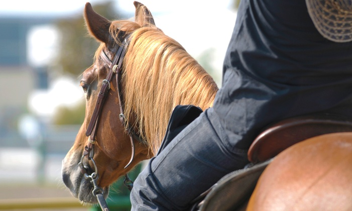 Liz Place Performance Horses - San Diego: One or Three One-Hour Horseback Riding Lessons at Liz Place Performance Horses (Up to 56% Off)