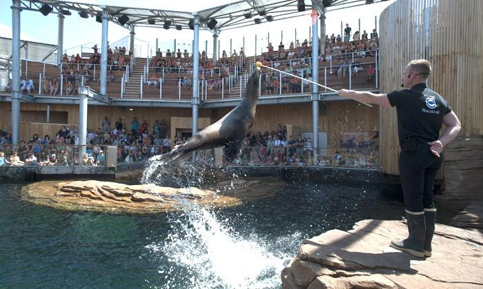Nausicaa - Boulogne Sur Mer Cedex: Nausicaá, l'un des plus grands aquariums européens : 1 entrée enfant ou 1 entrée adulte dès 8,60 €
