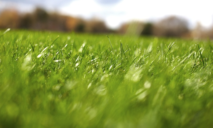 Weed Man of Greenville - Greenville: Lawn Winterization or Spring Pretreatment for a Small or Large Lawn from Weed Man of Greenville (Up to 51% Off)