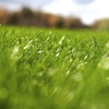 Up to 51% Off Seasonal Lawn Treatments