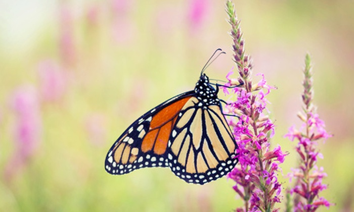 Watershed Butterfly Festival - Hopewell: Watershed Butterfly Festival for Two or Four on Saturday, August 10 (Up to 53% Off)