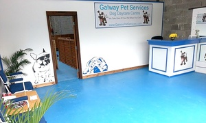 Galway Pet Services: Two-, Three- or Five-Day Stay for One Dog at Galway Pet Services (Up to 60% Off)