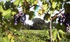 Corbin Farms Winery - Chesapeake: Wine-Tasting Package for Two or Four at Vizzini Farms Winery in Calera (Up to 55% Off)