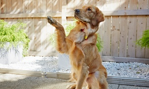 Camp Bow Wow McKinney: Doggy Day Care or Training at Camp Bow Wow McKinney (Up to 55%  Off). Three Options Available.