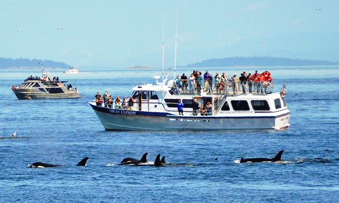 Orcas Island Tours From Seattle