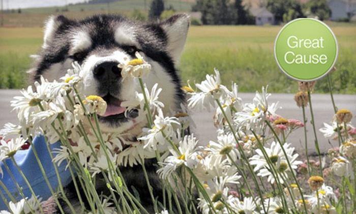 Washington Alaskan Malamute Adoption League: $10 Donation to Care for Malamute