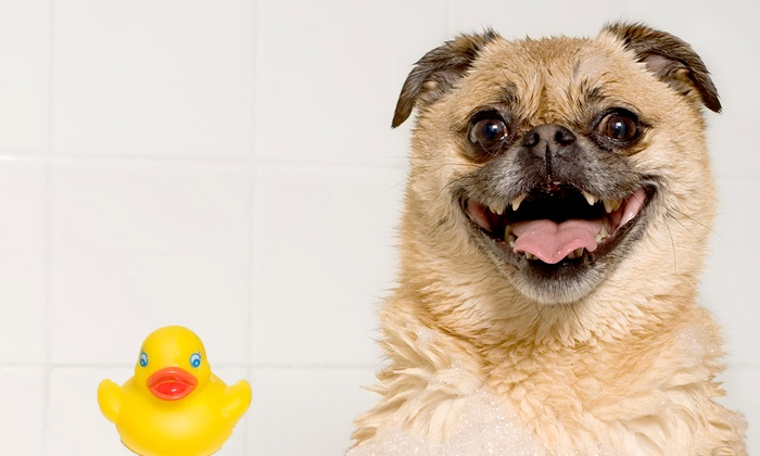 Strutt Your Mutt Grooming - Norcross: Grooming for a Small or Medium Dog or Dog Bath and Blueberry Spa Service at Strutt Your Mutt Grooming (Up to 55% Off)