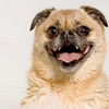 Up to 55% Off Dog Grooming