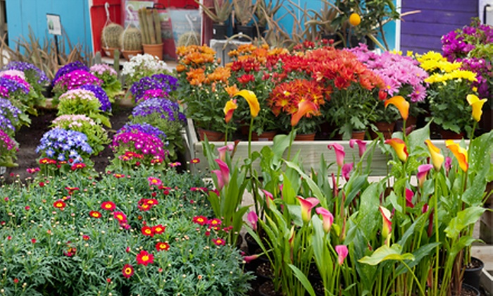 Kirshner Landscapes & Nurseries - Wrightstown: $25 for $50 Worth of Plants and Gardening Supplies at Kirshner Landscapes & Nurseries