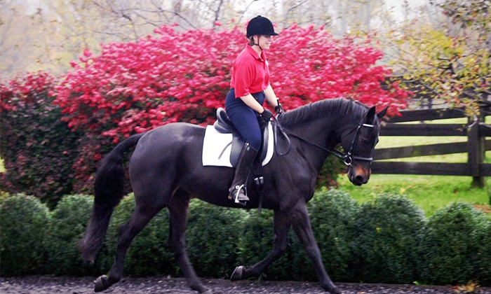 M Squared Stables - Wappingers Falls: One, Three or Five Horseback Riding Lessons at M Squared Stables (Up to 63% Off)