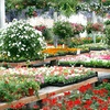 Half Off Flowers and Plants in Bolingbrook