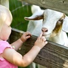 Up to 48% Off Petting-Farm Visit