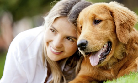 $15 for $30 Worth of Pet Toys, Treats, and Accessories at Holistic Animal Care Shoppes