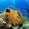 Tauchkurs  PADI Open Water Diver