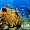 PADI Diving Certification