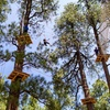 41% Off a Visit to Treetop Adventure Course