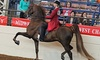 Avalon Riding Academy - Located Right Off of Van Dyke Road: One, Two, or Four 60-Minute Private Horseback-Riding Lessons at Avalon Stables (Up to 56% Off)