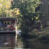 Up to 38% Swamp Tours from Jean Lafitte Swamp Tours