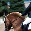 Up to 64% Off Horsemanship and Riding Lessons