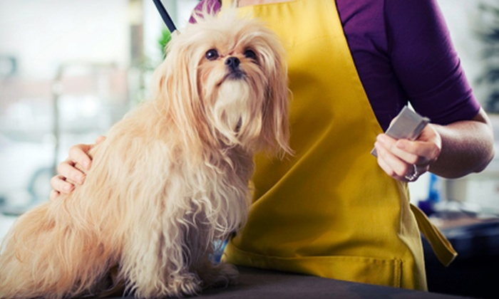 The Barking Lot - Lakeview: Dog Grooming for a Medium, Large, or Extra-Large Dog at The Barking Lot (51% Off)