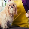 51% Off Dog Grooming at The Barking Lot