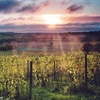 Sparkling Wine Tasting Experience