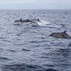 30% Off Whale Watching Trip