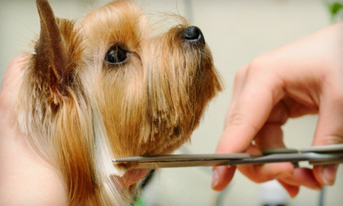 Boss The Pet Connection - Multiple Locations: Grooming Packages for Four Sizes of Dogs or Dental Cleaning for Any Size Dog at Boss The Pet Connection (Up to 61% Off)