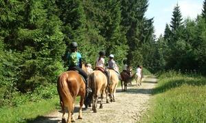 Les écuries Blue Sky: 1 ou 2 séances d'initiation au poney d'1h30 pour enfants dès 18 € aux Ecuries Blue Sky
