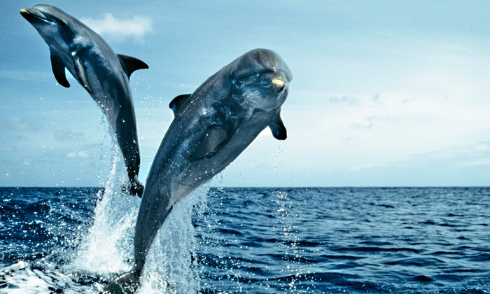 Olin Marler's - Destin Harbor: Dolphin Cruise for Child, Senior, or Adult from Olin Marler's Dolphin Cruises (Up to 42% Off)