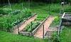 Griffins Gardens: 4'x8' or 4'x12' Raised Cedar Garden Bed from Griffin's Gardens (Half Off)