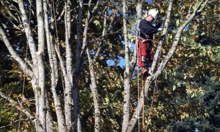 Arbor Barber Tree Service - Seattle: $99 for $300 Worth of Tree-Maintenance Services from Arbor Barber Tree Services