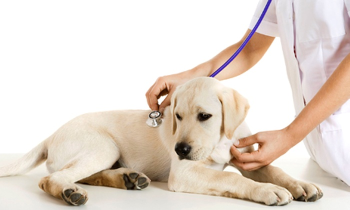 Shallowford Animal Hospital - Chattanooga: $20 for Vet Visit with Pet Exam and Heartworm Test at Shallowford Animal Hospital ($93 Value)