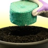 Tomato Rocket Planting Kit and Grass Repair Patches
