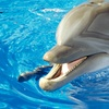Up to Half Off Dolphin Watch Tour with Snorkeling and Kayaking