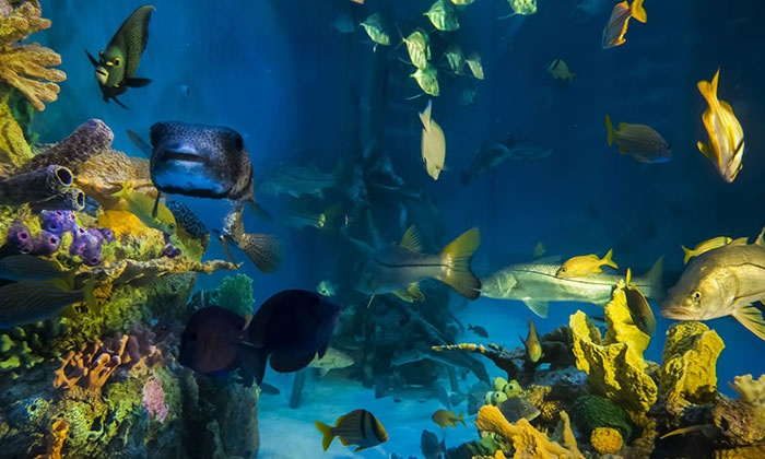 RumFish Grill - St. Pete Beach: $45 for a Swim in 33,500-Gallon Tank for Two with Breakfast or Lunch at RumFish Grill ($75 Total Value)
