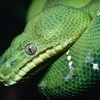 Half Off Reptile and Exotic-Pet Show for 4