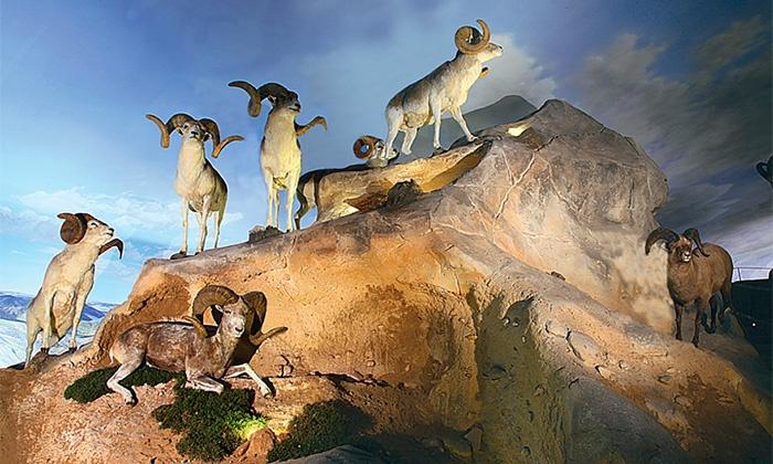 Centro Andaluz de la Fauna Salvaje - Centro Andaluz de la Fauna Salvaje: Visita el Centro Andaluz de la Fauna Salvaje: entradas y actividades para niños y adultos desde 7,95 €