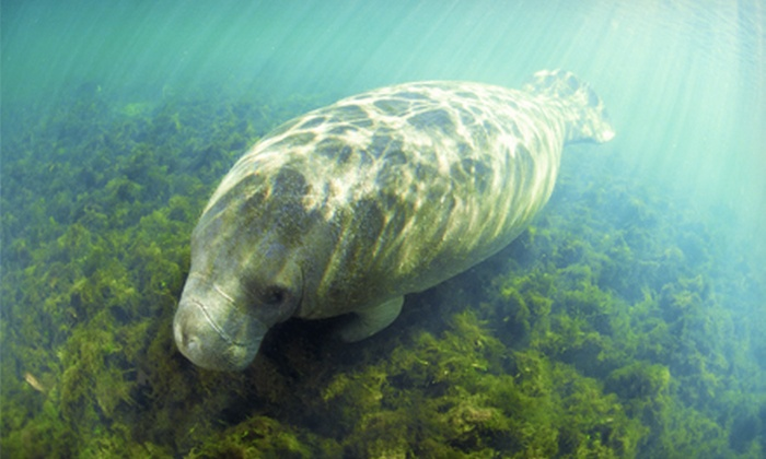 Double R's Fishing and Tours Company - Naples: Manatee Viewing Tour for Child or Adult from Double R's Fishing and Tours Company (51% Off)