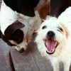 Up to 52% Off Dog Daycare or Boarding